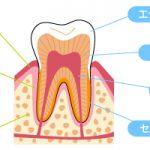 3.歯の仕組み・形・大きさ(その3)