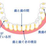3.歯の仕組み・形・大きさ(その7)