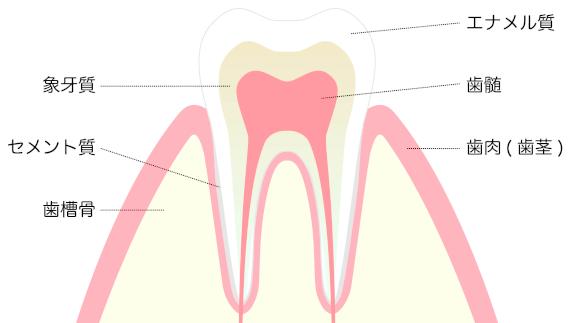 鶴ヶ島の歯医者・歯の構造